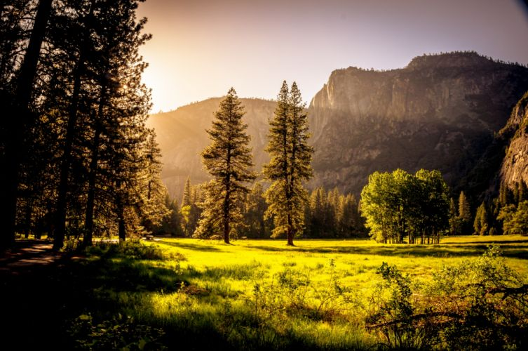 amazing dawn fall fog foliage forest grass green landscape mist mountains nature outdoors scenery scenic sky summer sun sunrays sunset tree trees wallpaper