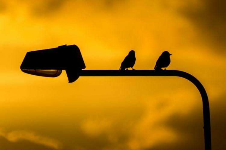 animals birds clouds dusk lamppost lantarn orange sitting sky sunrise sunset sunshine twilight warm yellow wallpaper
