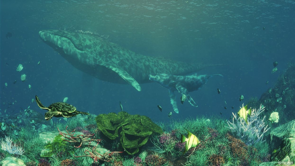 A Humpback Whale and calf wallpaper