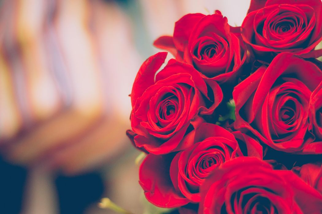 beautiful bloom blooming blossom blur blurred bouquet close -up close-up color decoration flora flowers petals red red roses roses wallpaper