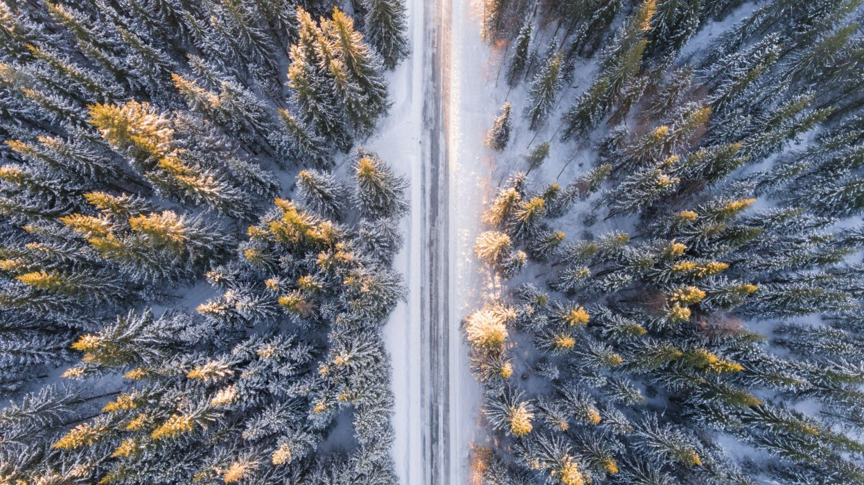 beautiful bird's eye view bright calm christmas cold color discovery environment evergreen forest frost frozen wallpaper