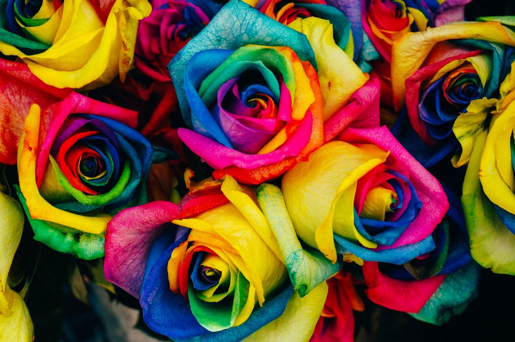 Bloom Blossom Colorful Colourful Flora Flowers Paint Rainbow Roses Wallpaper