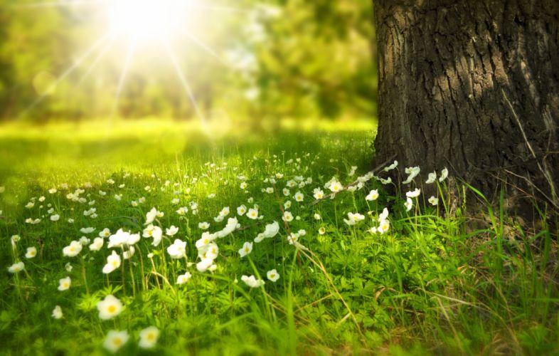 bloom blossom flora flowers grass nature outdoors sun sunrays wallpaper