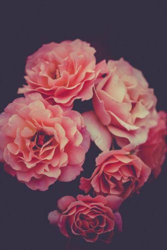 bloom blossom flora flowers petals plants wallpaper