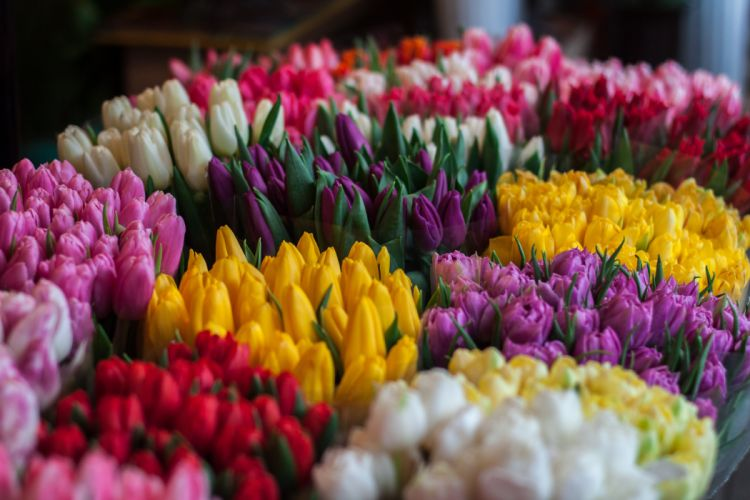 blossom bouquet bouquets colors flora flower bouquet flower bouquets flowers flowers market market pink purple red spring spring flower spring flowers summer tulips white yellow wallpaper