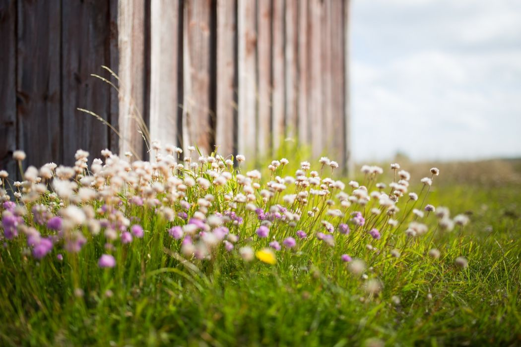 blossoms flowers garden green meadow purple summer wallpaper