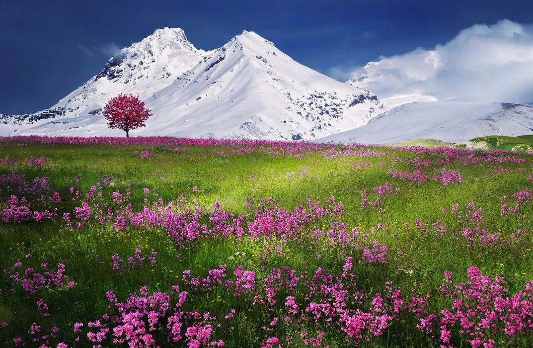 breathtaking calm color colorful environment exciting flowers incredible inspiration land landscape lone mountain natural nature outdoor peaceful relaxation scene scenic season serene snow tree wallpaper