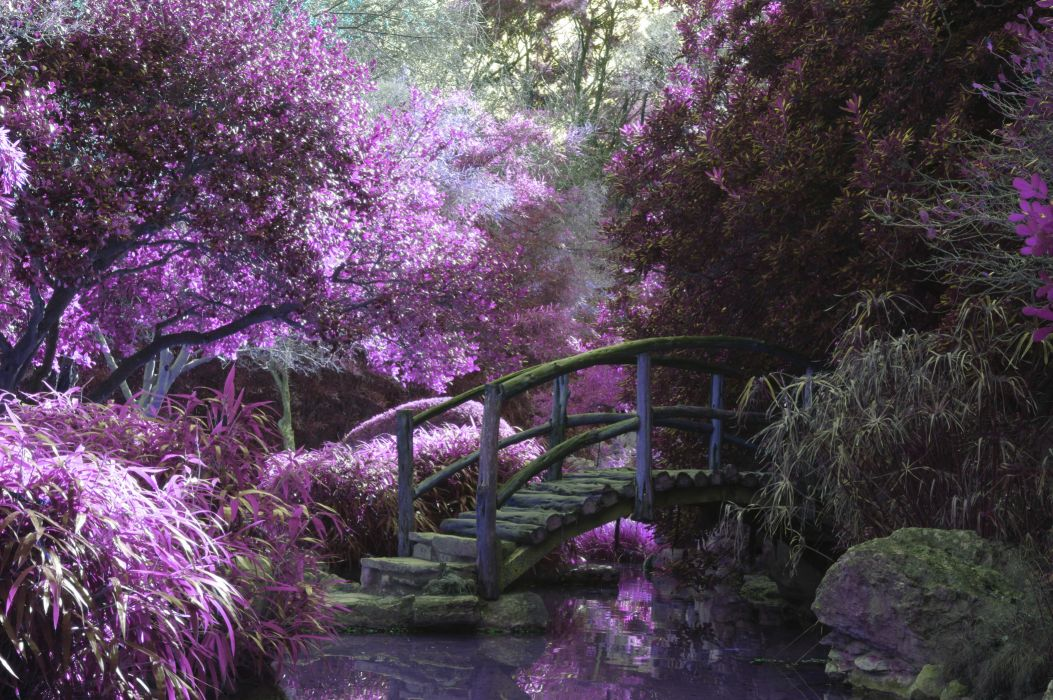 bridge dream nature purple violet wallpaper