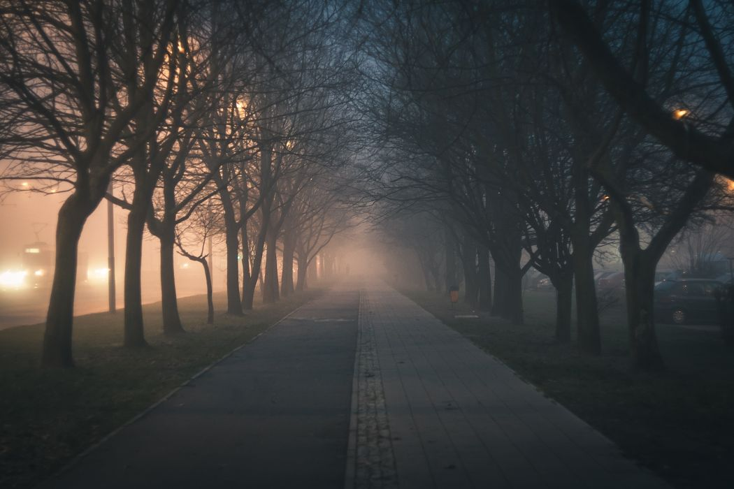 Dawn Evening Fog Hazy Landscape Light Mist Nature Night Outdoors Park Pavement Road Street Trees Twilight