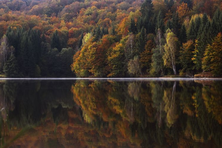 autumnal colorful conifer dawn daylight fall forest green lake landscape natural nature outdoors reflection river scenic sunrise sunset travel trees vibrant water wood yellow wallpaper