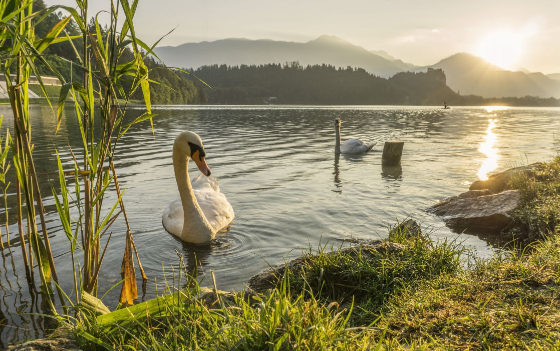 animal dawn daytime duck grass lake landscape mountain outdoors poultry reflection river summer sun sunset travel water waterfowl wallpaper