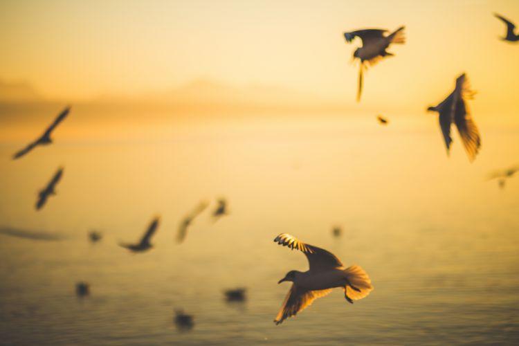 beach birds blurred dawn dusk flock flying motion ocean sea seagulls seashore silhouette sunrise sunset water wallpaper