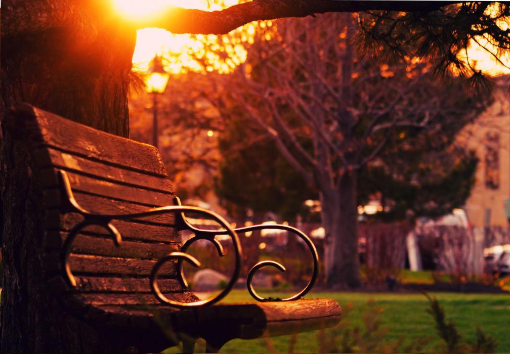 bench dawn dusk outdoors park sun glare sunrise sunset tree wooden wallpaper