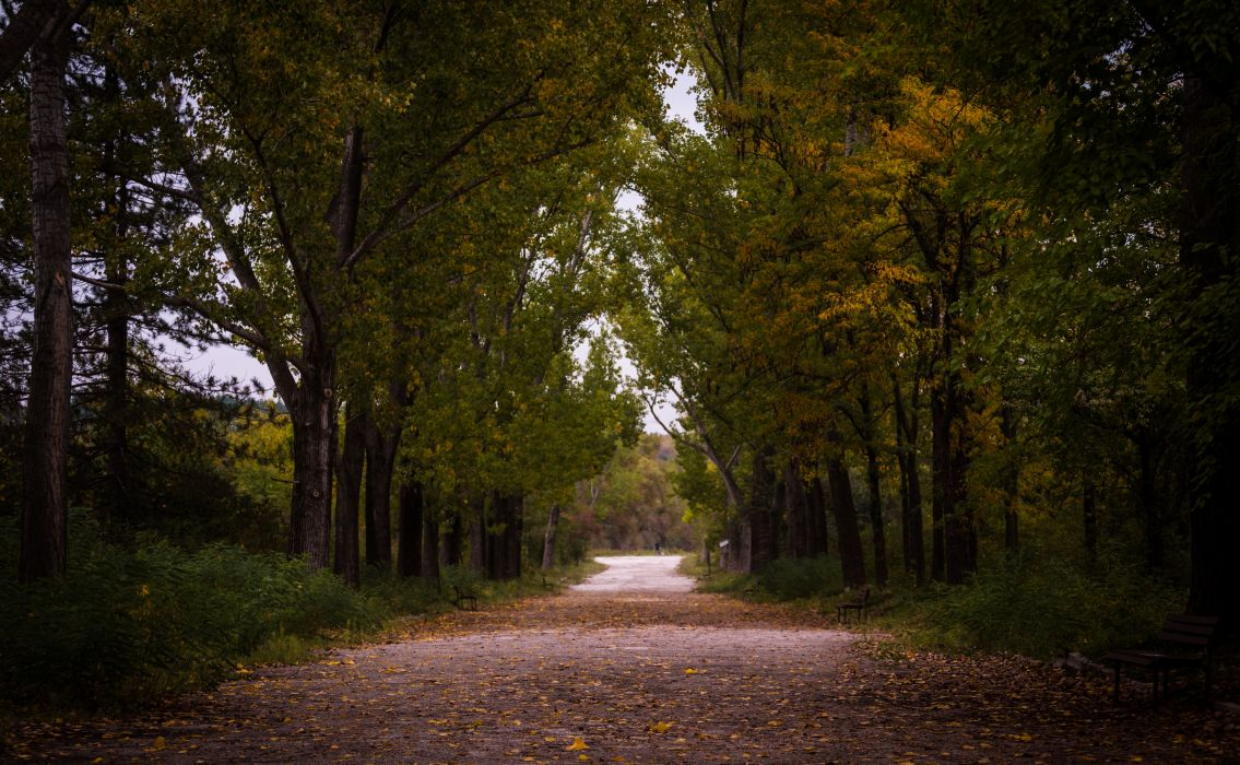 autumn daylight environment fall forest guidance landscape leaves light nature outdoors park path pathway pavement road scenery scenic summer sunset trail travel trees wood woods wallpaper