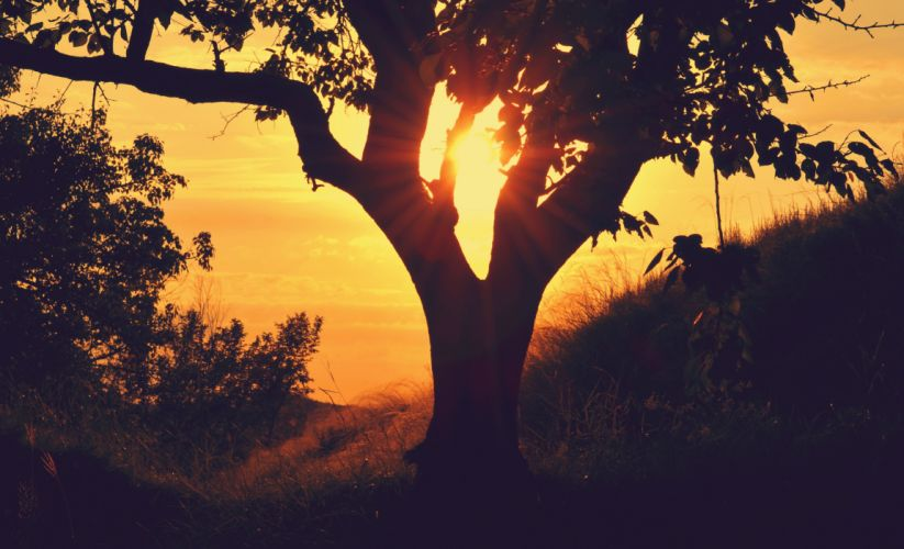 bough hill silhouette sunrise sunset tree twilight wallpaper