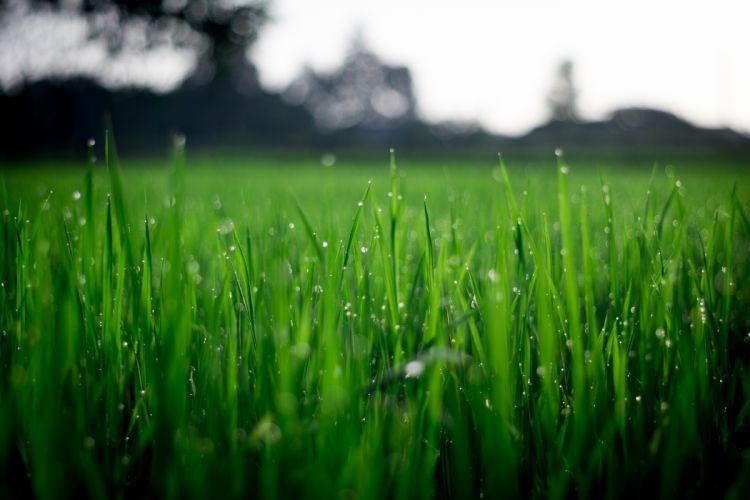 blade blur dew farm field flora garden grass green growth hayfield lawn lush rural summer turf wallpaper