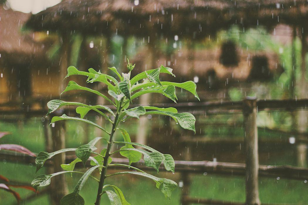 plant rain waterdrops wallpaper