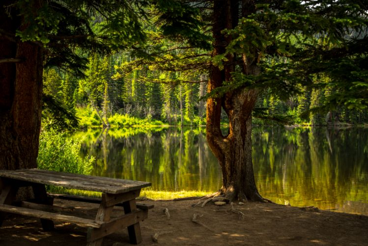 forest grass lake landscape outdoors park river scenic travel trees water wallpaper