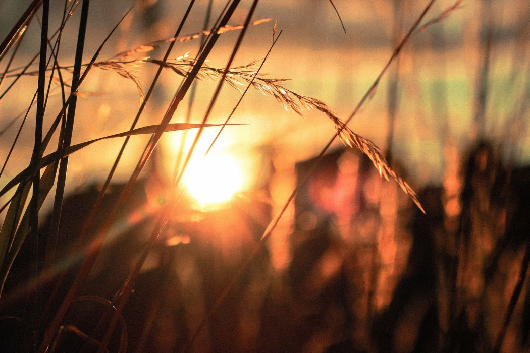 country countryside field grass overgrown sunny sunrise sunset wallpaper