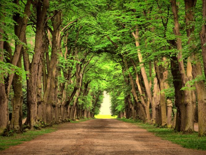 camino carretera arboles naturaleza wallpaper
