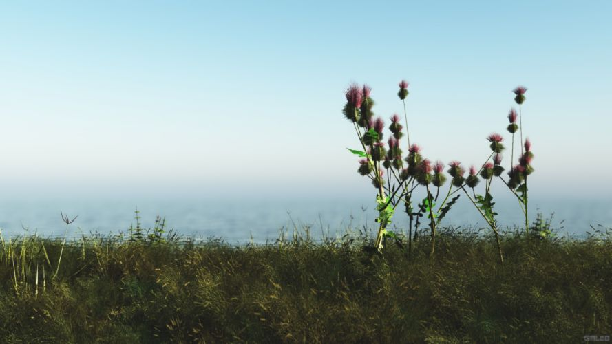A thistle in the dunes wallpaper