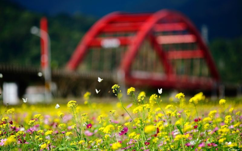 butterflies yellow flowers bokeh wallpaper