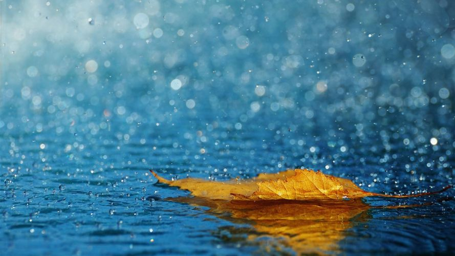 Photography-arts-style-yellow-leaf-rain-water wallpaper