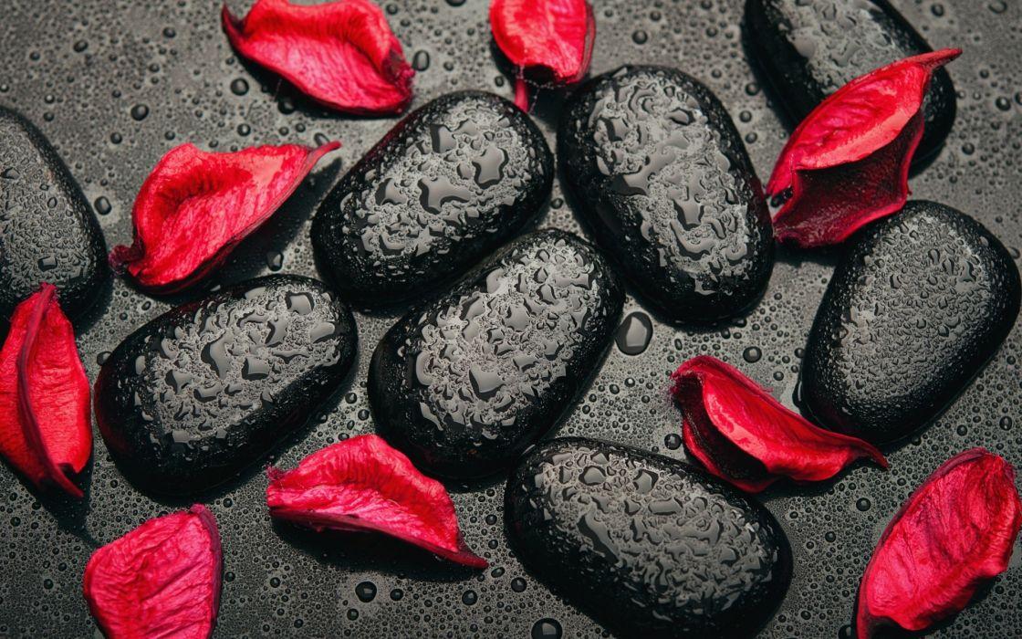 Photography-arts-style-red-flower-petals-black-rocks-rain wallpaper