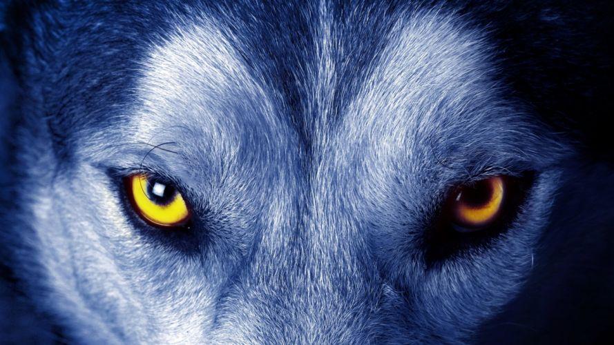 Beautiful Wolf Eyes wallpaper