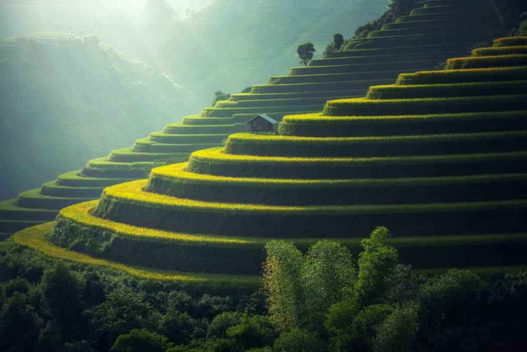 agricultural agriculture cropland daylight ecology farm fog food grass green ground growth hut land landscape mountains outdoors plant rice rice terraces scenic soil sunlight trees public domain images wallpaper