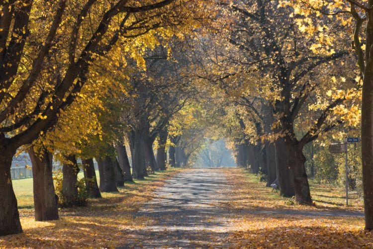 autumn avenue fall leaves park trees wallpaper