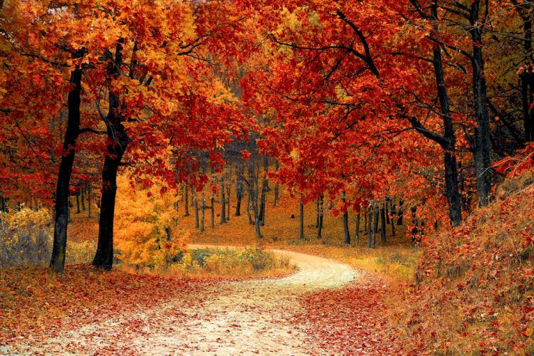 autumn colorful colourful fall forest leaves nature road trees woods wallpaper