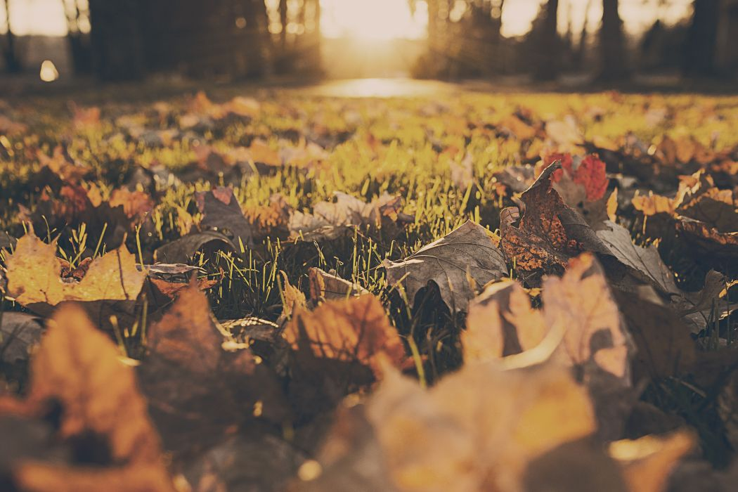 autumn fall foliage forest leafs leaves meadow wallpaper