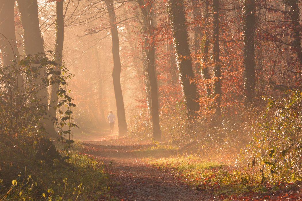 autumn backlit branch dawn environment fall fog forest jog landscape leaves light mist nature outdoors path road run sun sunlight trees woods wallpaper