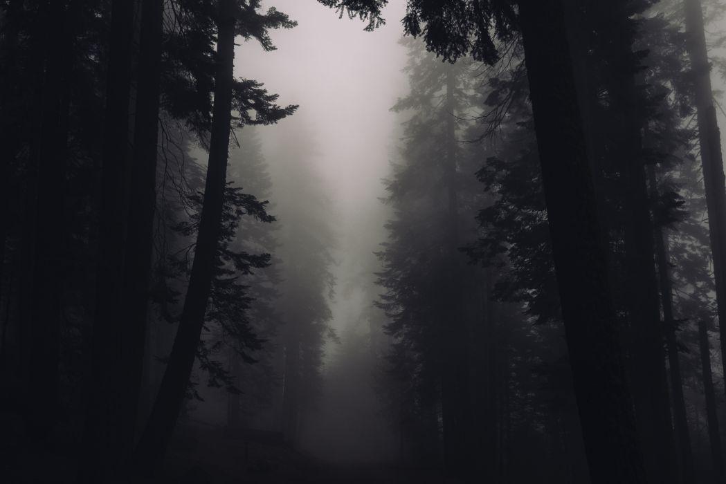 black-and-white creepy dark eerie fog foggy forest nature silhouette trees wallpaper