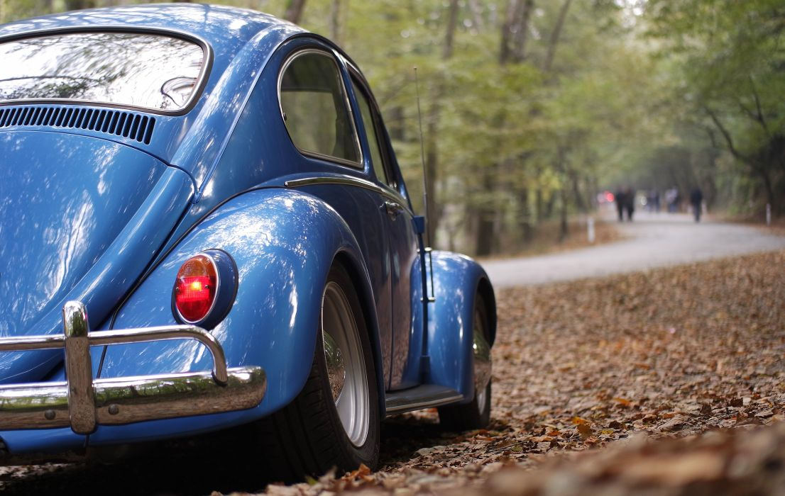 automobile automotive beetle car classic flowers road tail light vehicle volkswagen wallpaper