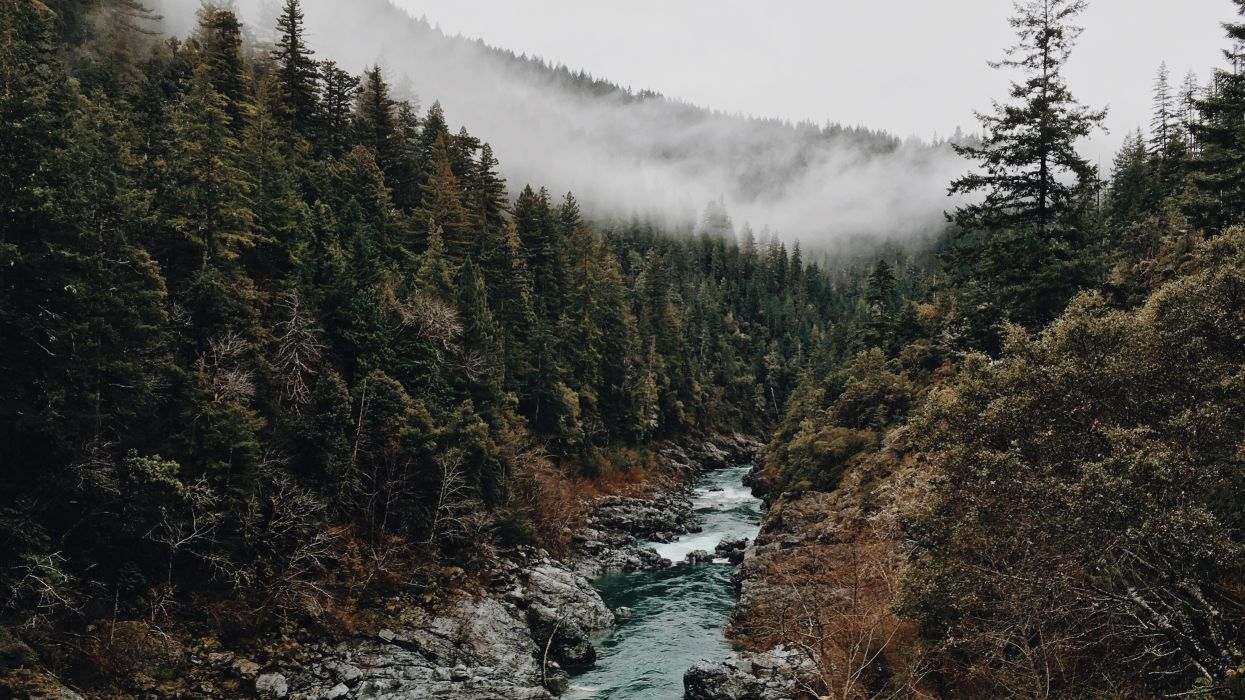 brook creek fog foggy forest misty mountains stream trees water wallpaper