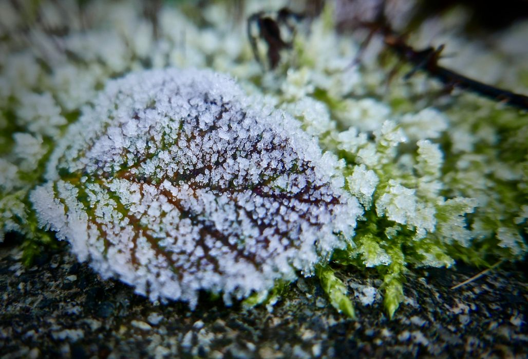 bright close-up color environment frost garden green growth ice leaf moss nature outdoors season snow winter wallpaper