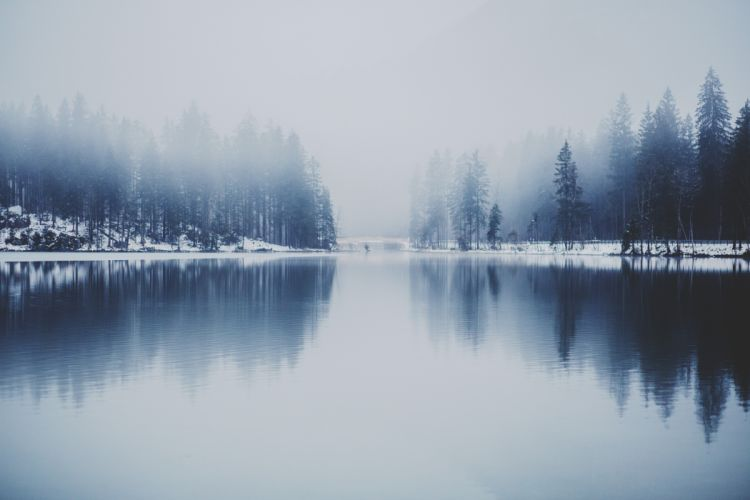 cold fog forest lake snow trees water winter wallpaper