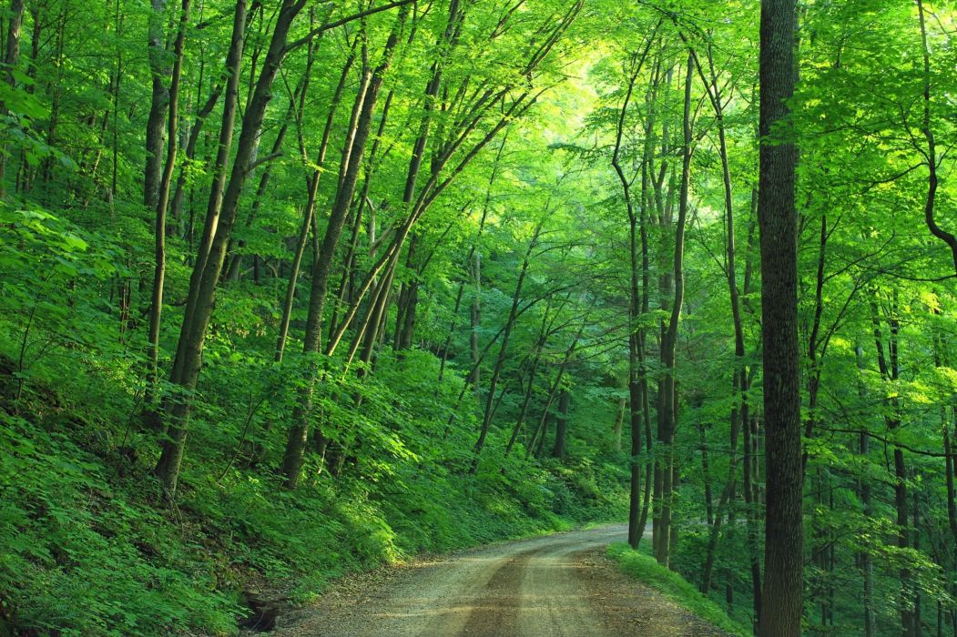 dirt road forest landscape leaves path pathway quiet road roadway trail trail roads tree trunks trees way woods royalty free images wallpaper