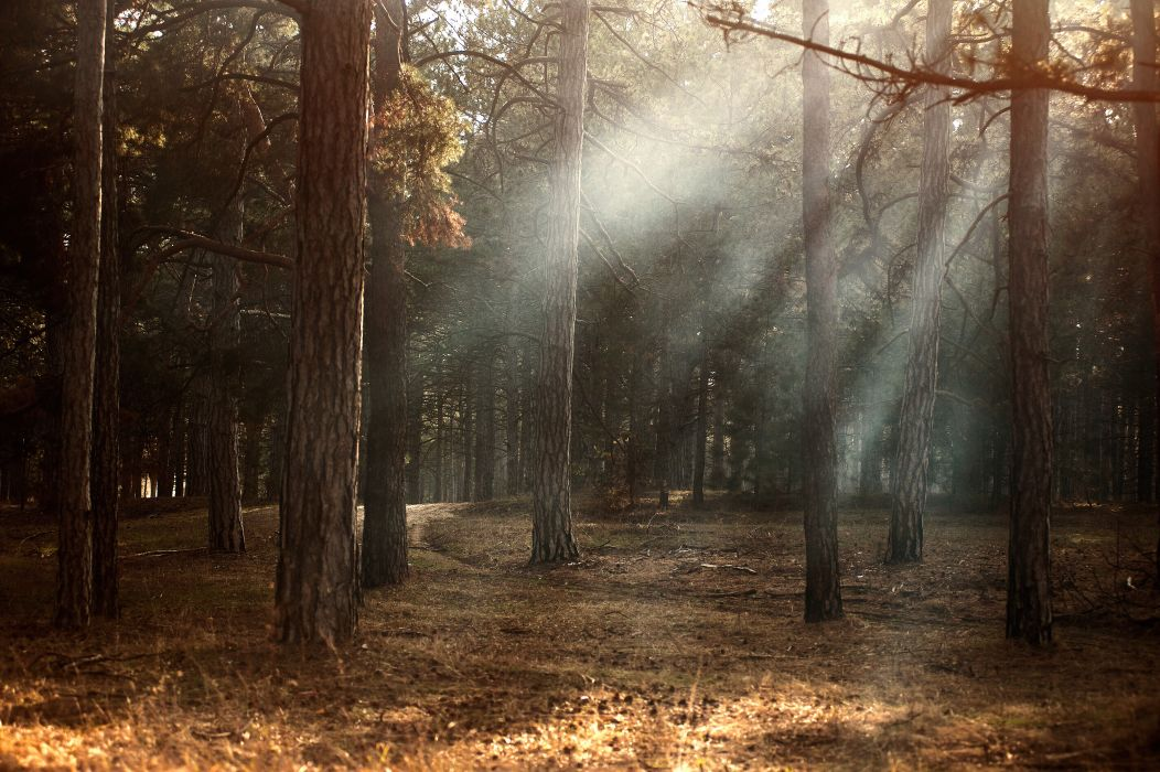 dawn environment fall fog foggy forest idyllic landscape light mist morning mystery nature outdoors park rays road scene scenery scenic shine shining sun sunbeams sunlight sunny sunrise trees woodland woods wallpaper