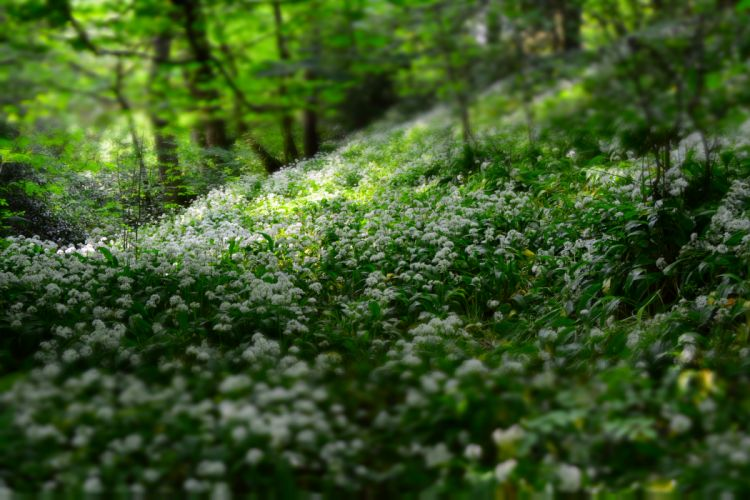 depth of field flora flowers forest nature outdoors trees wild flowers wallpaper