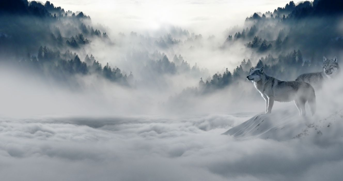 fog foggy hazy mist misty mountain murky nature snow snow wolves trees wolves wallpaper