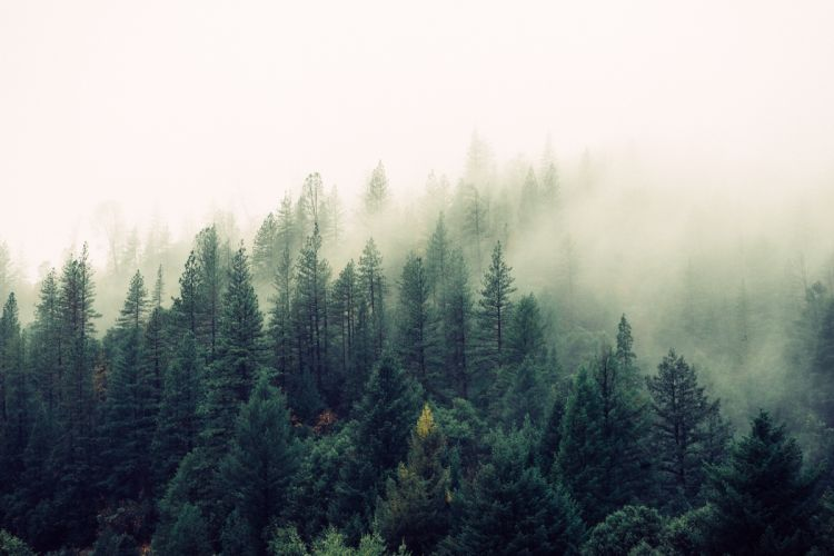 fog foggy forest haze mist misty mystical nature trees wallpaper