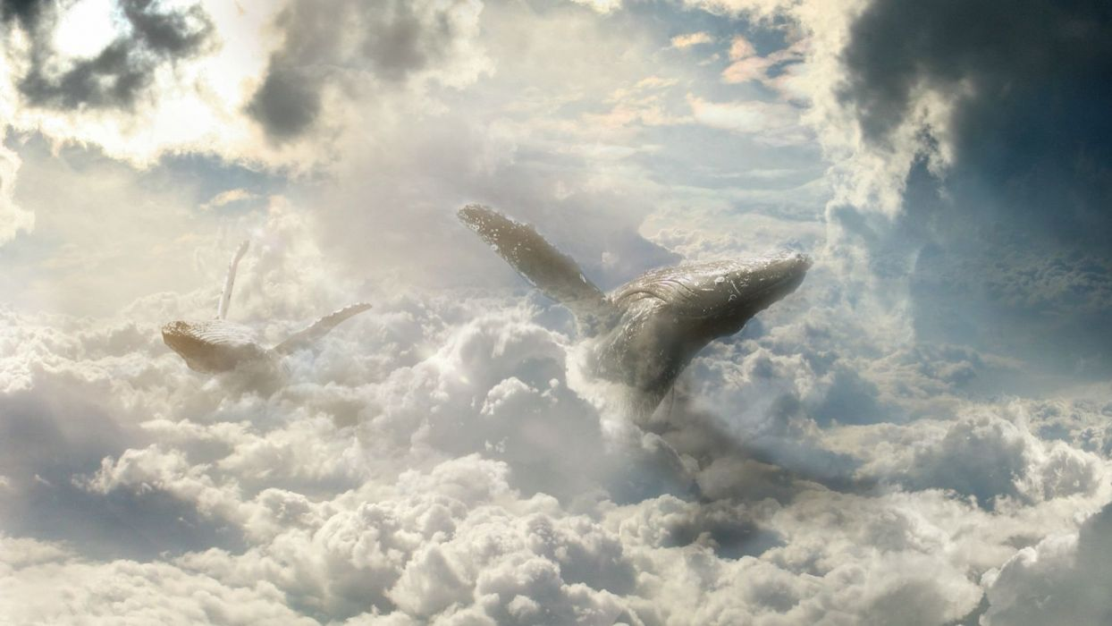 fantasy art fiction atmosphere heaven clouds sky clouds animals whales pirouettes tumbles sailing through the air layers wallpaper