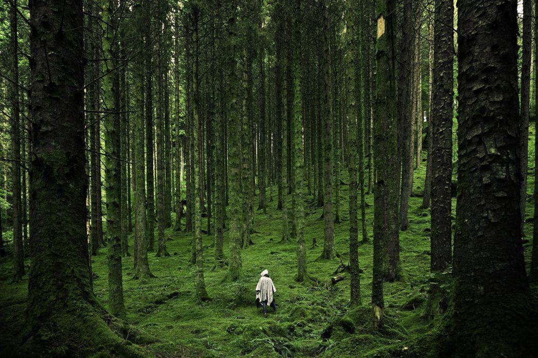 forest hiking trees wanderlust wallpaper