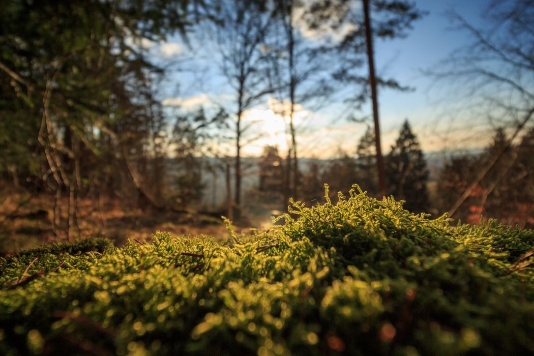 forest moss nature trees wallpaper