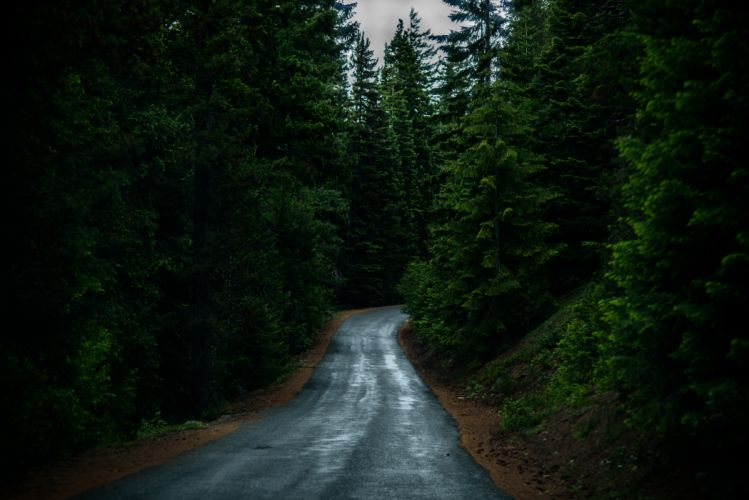 nature road forest wallpaper