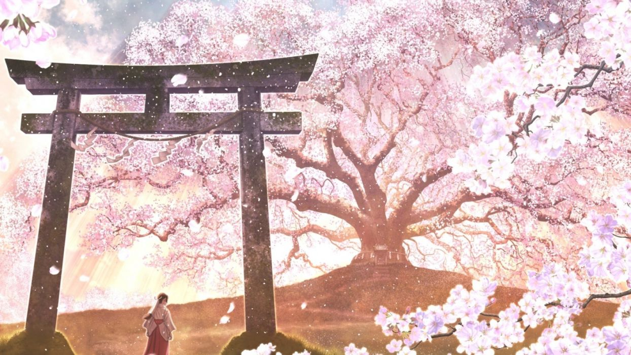 Sakura Blossom Anime Landscape Japanese Clothes Wallpaper