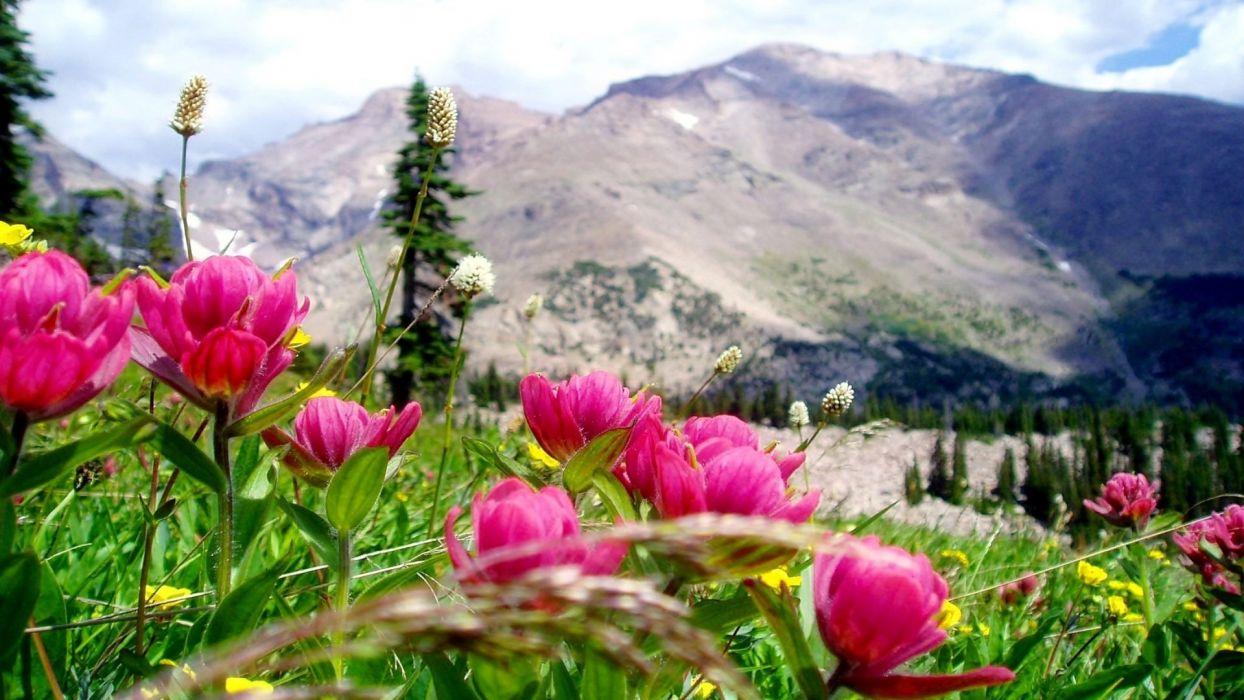 Beautiful-mountain-landscape-beautiful-pink-mountain-flower-mountain-sky-clouds wallpaper